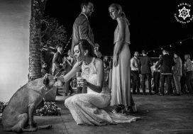 "Foto de: <a href=""https://fotografos-de-boda.net/porfolio/jose-miguel-fotografo-personal/"">Jose mIguel Ferrandiz</a>"