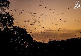 Photo: Wellington Fugisse